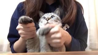 【猫たちが】セクシーキャットの演説【踊ってみた*】