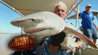 catching-the-rare-glyphis-river-shark-river-monsters