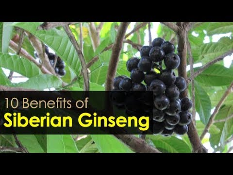 10 Benefits of Siberian Ginseng - Natural Health Guide