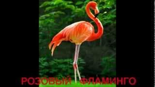 Дикие животные и птицы АФРИКИ со звуками - видео для детей