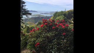 Visiting Larnach Castle Gardens with Fantail Tours
