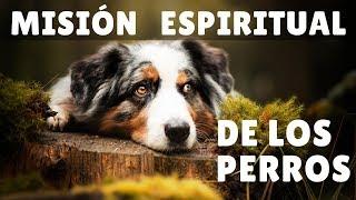 Misión Espiritual de los perros