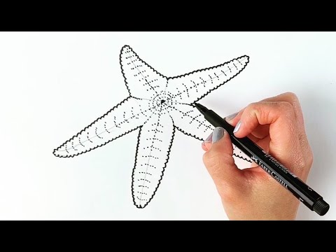 How To Draw A Starfish Step By Step