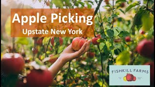 Apple Picking Upstate New York #ExploreWithKirti