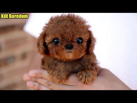 Cutest Celeb Pets