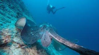 GoPro HD - Scuba Diving Maldives