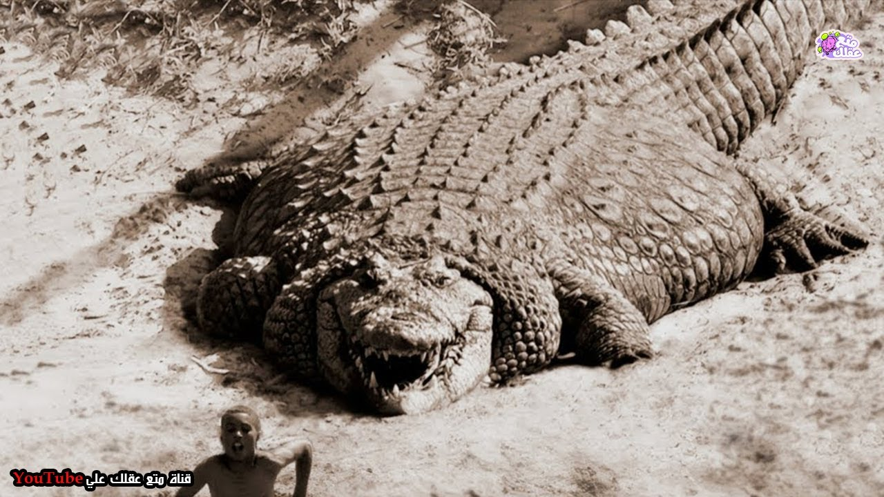 أكبر 10 تماسيح في العالم - لن تصدق انهم موجودون بالفعل !