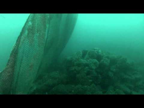 Short Banks 200 Feet Deep Lost Commercial Fishing Net