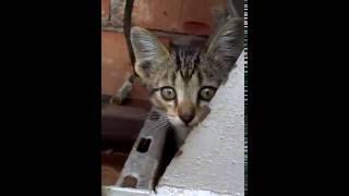 котятки - забирайте ласковых малышей