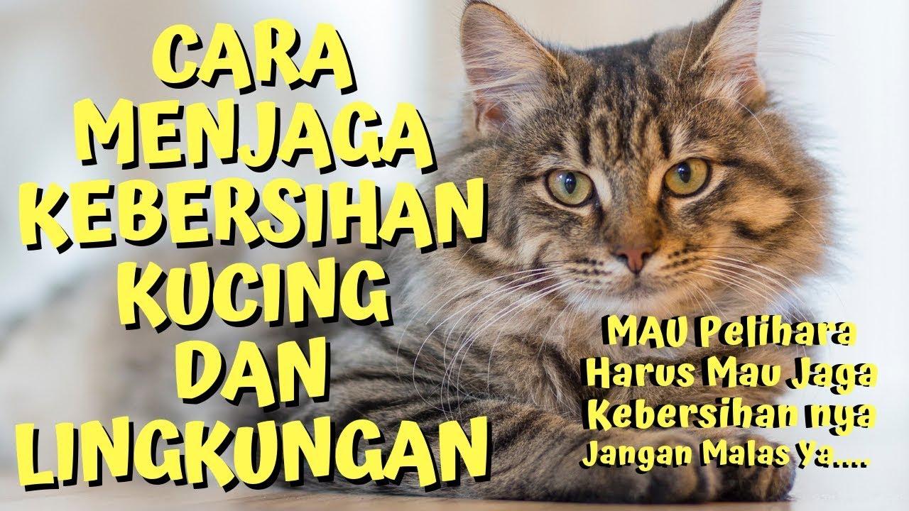 Kebersihan Hewan Peliharaan Mencuci Kucing Perawatan Dan Pendidikan 2020