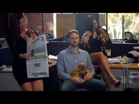 Acee-Gehlken Chat: Super Bowl Ads | San Diego Union-Tribune