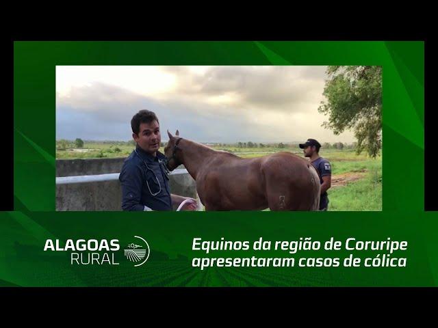 Na última semana, equinos da região de Coruripe apresentaram casos de cólica