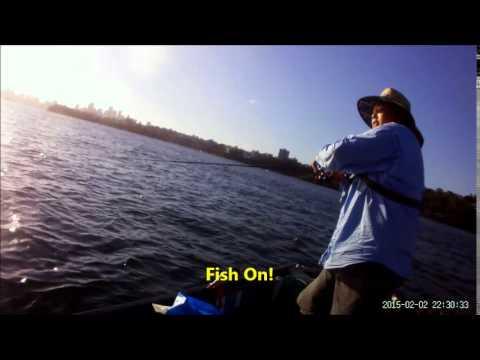 Fishing Sydney Harbour 17/02/15 - Frigate Mackerel galore & mac tuna