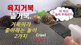 [별거북]시즌2 아성체 #.6 거북이가 좋아하는 2가지…