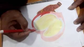 Beautiful Mango Coloring for kids | How to draw Mango