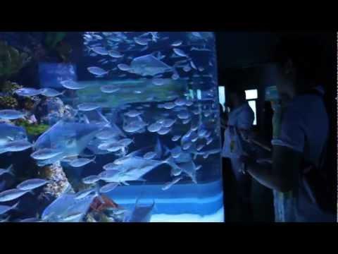 S.E.A. Aquarium - Resorts World Singapore [HD]