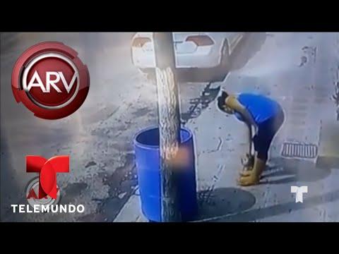 Graban a abusadora que tira a un cachorrito a la basura | Al Rojo Vivo | Telemundo