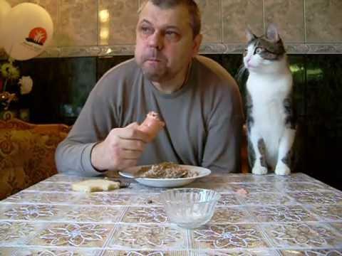 Смотреть Как мой кот, просит кушать.  Butch cat chooses sausage. онлайн