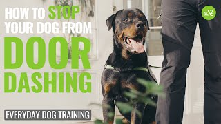 How to Stop Your Dog From Door Dashing! Episode # 2 #dogcare #dogtraining #trainingcollar