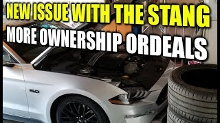 NEW ISSUE WITH THE MUSTANG * Story Time With Street * Stang Stories
