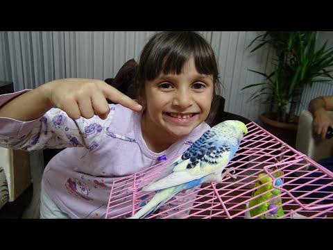 Kapımızda Sürpriz Kuş Bulduk Lina Çok Sevindi