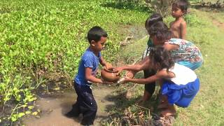 Cambodia Traditional Fishing in my villages - Amazing Children Trap Fish - Catch And Cook