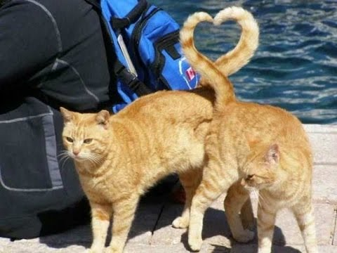 21 Perfectly Timed Cat Photos | Vol. 1
