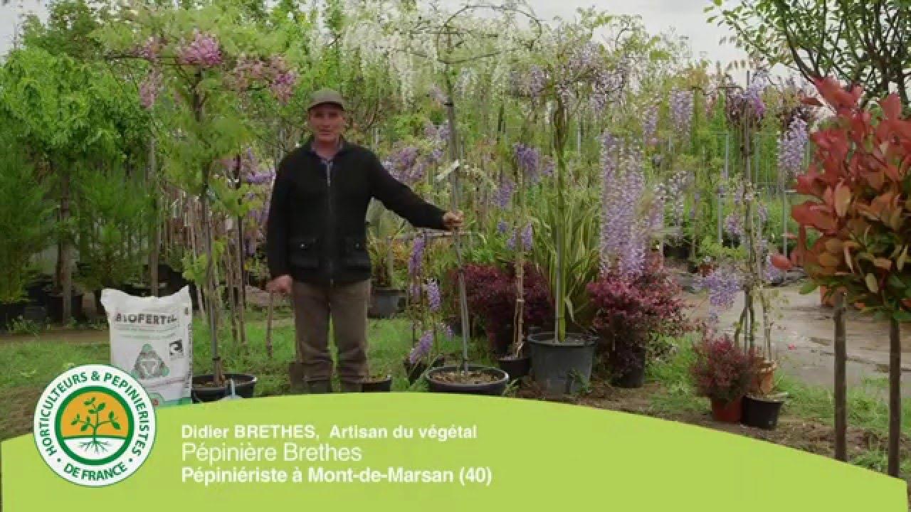 Quel Support Pour Une Glycine comment planter une plante grimpante ? la glycine