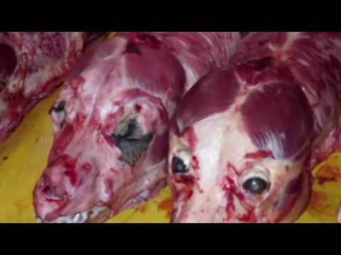 exposed:-korean-dog-farms-breed-dogs-for-meat