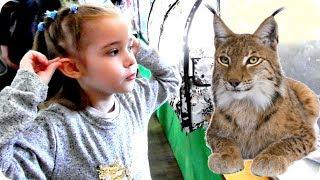 """Ульяна на Международной выставке кошек """"Кэт Ассорти Весна - 2018""""  Детское видео на канале УльТиВи"""