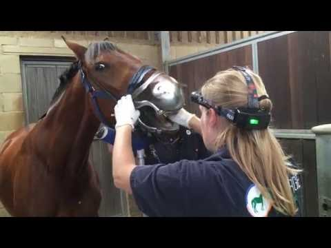 George Equine Dental Services - checking inside the horse