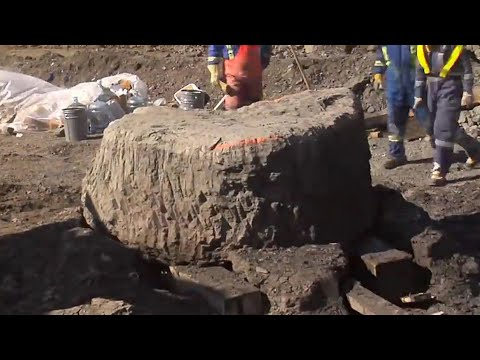 Worker Discovers 100 Million Year Old Remnants in an Oil Sands Mine