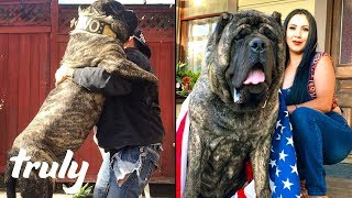 Ultimate Guard Dog Weighs 200lbs | TRULY