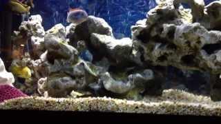 125 Gallon Fresh/salt Water Aquarium