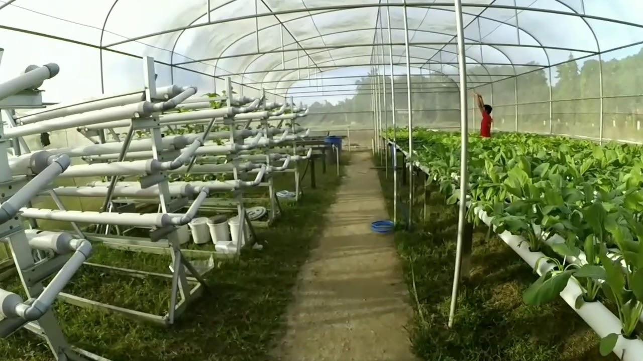 Green House Hidroponik Smk Spp Negeri Samarinda
