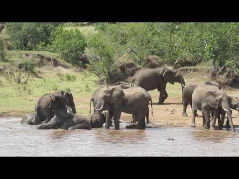 Elephants at Mara River