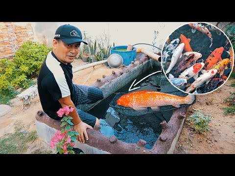 Preparing Spawning Tank! How To Choose Right Breeders│KOI BREEDING Episode 1