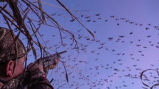 250,000 GEESE! {Catch Clean Cook} a SPECK-tacular Hunt (California Waterfowl Association)