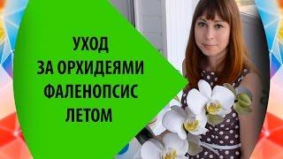 Уход за Орхидеями Фаленопсис Летом: особенности(Как ухаживать за орхидеями фаленопсис летом. Особенности ухода за орхидеями, полива, увлажения воздуха..., 2015-07-10T10:17:30.000Z)