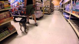 Harlie's Obedience Training
