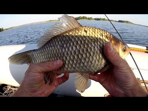на что клюет краснопёрка трофейная рыбалка