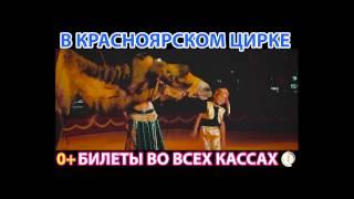Шоу слонов-великанов в красноярском цирке