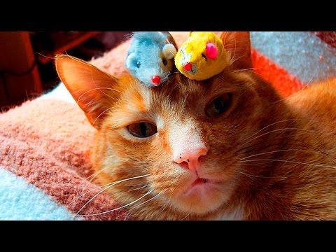 Smart Cats doing Tricks #1