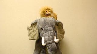 猫ライオンまると小侍郎 親子。象に乗って寝ていますzzz 大人も座れる象...