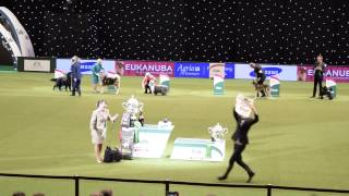 """As the Crufts """"Best in Show"""" results were announced, this PETA supp..."""