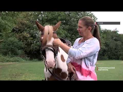Чернівецький Промінь: Волонтери допоможуть облаштувати леваду для коней, яких прихистили чернівчани на своєму обійсті