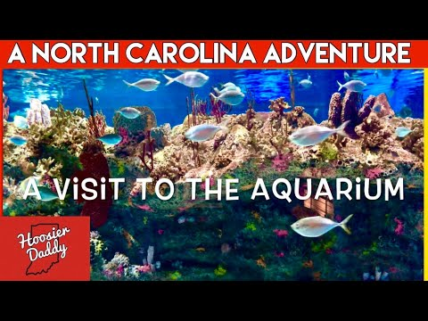 Visiting The North Carolina Aquarium At Fort Fisher | Hoosier Daddy