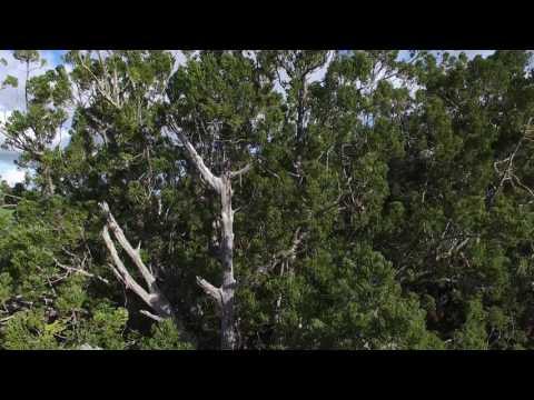 Puketi Forest 2016