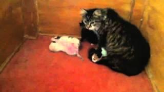قطة تحتمي وصغارها من برد تركيا القارس بمنبر جامع في اسطنبول (فيديو)