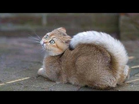 You will LAUGH EXTREMELY HARD, NO DOUBT! - Best FUNNY ANIMAL videos